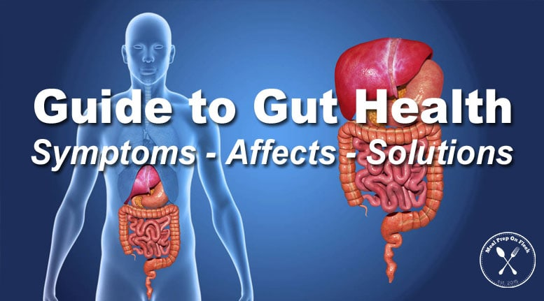 Beginners Guide to Gut Health
